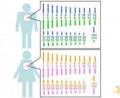 高齢出産で起こりえる染色体異常